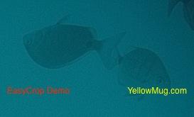 20 000 lieux sous les mers en sous marin !