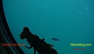 une langouste est venue nous dire bonjour sur le hublot par 15 mètres de fond