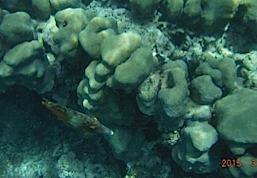 DSCF2854 poisson jaune