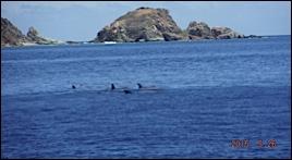 –De SOPERS HOLE MARINA (Tortola) A NORMAN ISLAND ILE AU TRESORS :     UNE COLONIE DE REQUINS OU DE GLOBICEPHALES TROPICAUX  NOUS ACCUEILLE