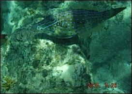 les poissons à LED incorporée
